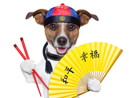 asian dog with hand fan and chopsticks photo