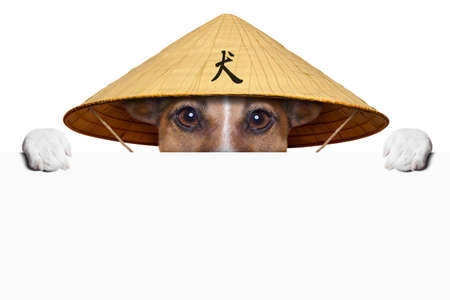 asian dog with chinese hat  behind banner photo