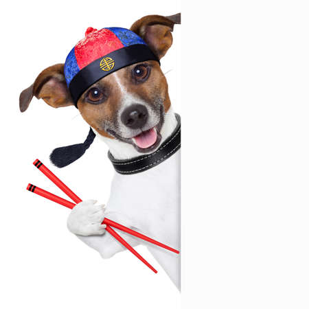 asian dog with chopsticks and asia hat behind banner Stock Photo - 19294016