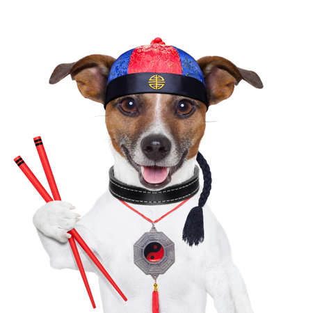 asian dog with chopsticks and asian hat photo