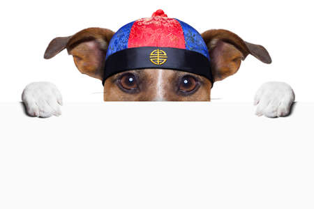 asian dog with chopsticks and asian hat behind banner Stock Photo - 19294014