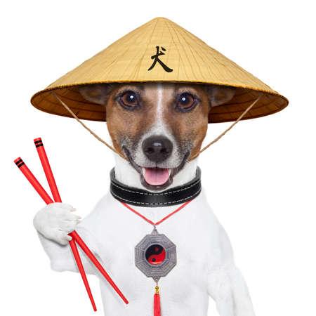 aliments droles: chien asiatique avec des baguettes et en Asie chapeau