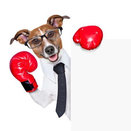 Boxing business dog behind white banner Stock Photo - 19294027