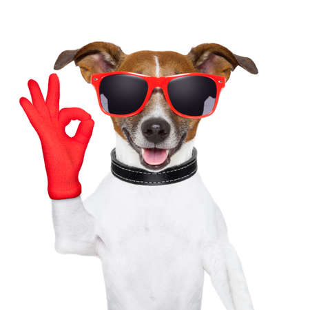 glass background: ok fingers dog with red gloves and glasses Stock Photo
