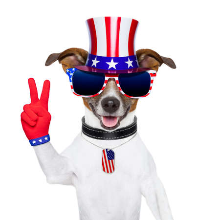 american peace dog with victory fingers gloves photo