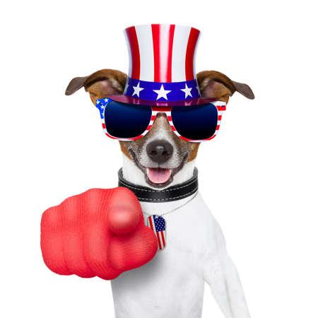 julio: perro americano que señala con el dedo grande en usted Foto de archivo