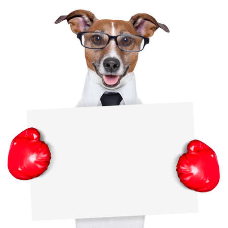 boxing business dog behind a white banner Stock Photo - 19405275