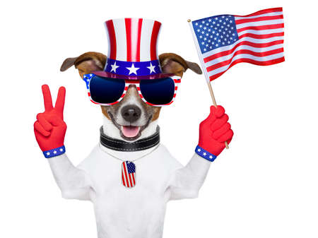 fourth of july: american dog with peace  fingers waving american flag