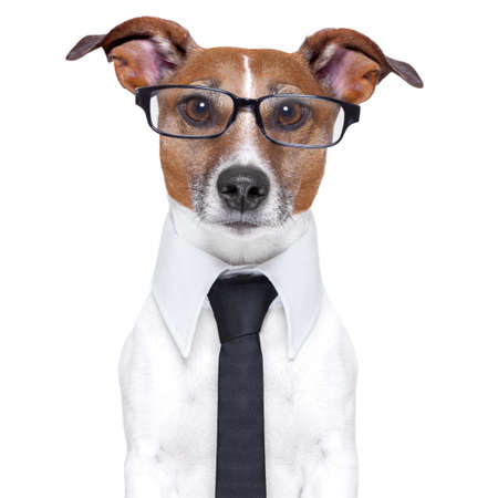 business dog with a tie and glasses photo