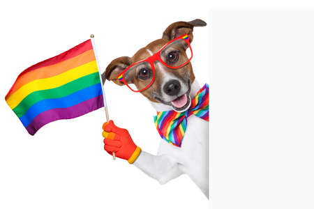 gay pride dog waving a rainbow flag behind banner photo