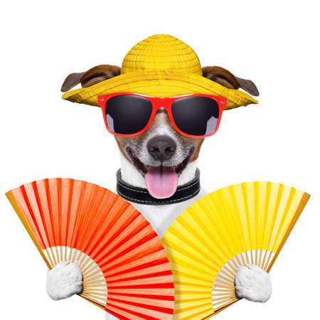 sudando: perro del verano con dos ventiladores de la mano que agita Foto de archivo