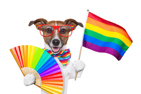 gay pride dog waving a rainbow flag photo