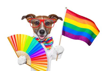 homosexuales: perro del orgullo gay ondeando una bandera del arco iris