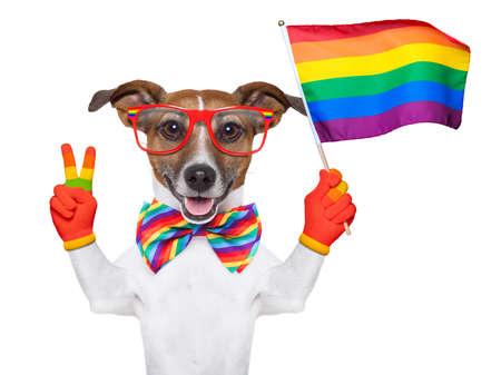 amor gay: perro del orgullo gay ondeando una bandera del arco iris