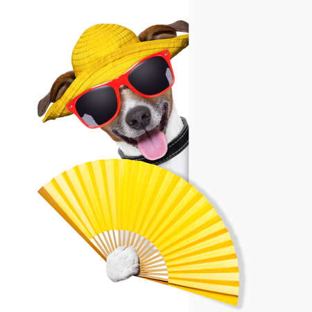 air animals: summer cocktail dog cooling of with hand fan behind banner