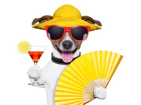 letní koktejl pes chlazení s ručním ventilátorem Reklamní fotografie