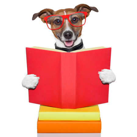 library student: school dog reading a big red book Stock Photo