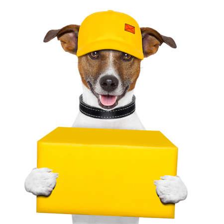 모자를 가진 개를 배달 노란색 포스트 박스