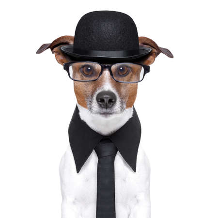 tuxedo: british dog with black bowler hat and black suit Stock Photo