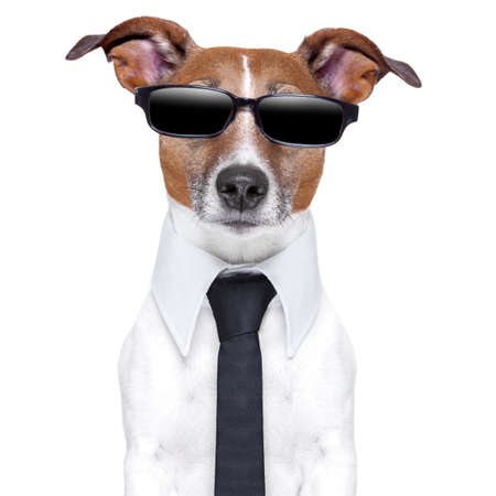 personality: perro fresco con los vidrios negros y una corbata de Foto de archivo