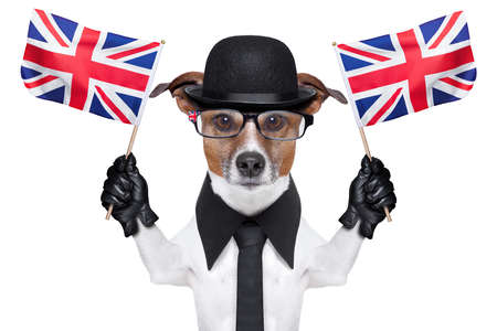 british dog with black bowler hat and black suit waving flags photo