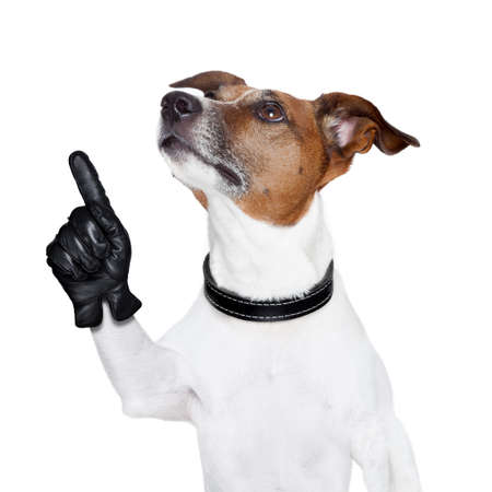 terriers: dog looking up and pointing up to something Stock Photo
