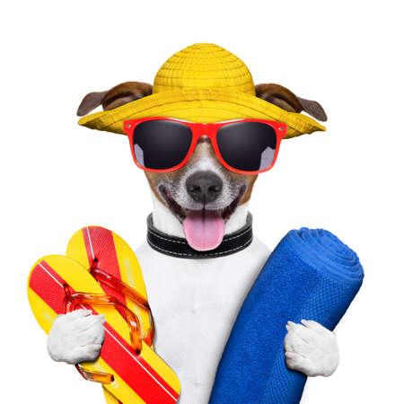 cão de verão com toalha e chinelos