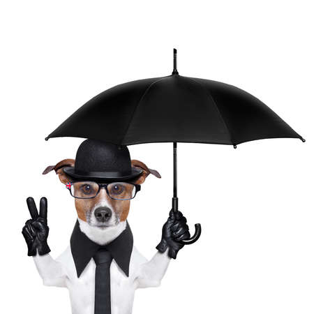 umbrella rain: british dog with black bowler hat and black suit holding am umbrella