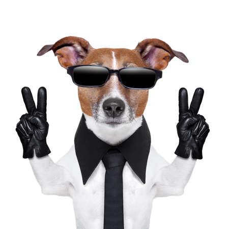 smiley pouce: chien cool avec les doigts de la paix dans des gants de cuir noirs Banque d'images