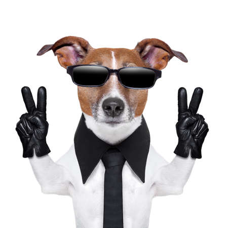 cool dog with peace fingers in black leather gloves photo