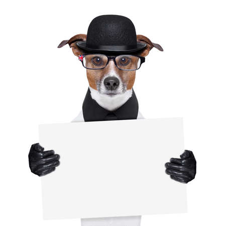 british dog with black bowler hat and black suit Stock Photo - 19632466