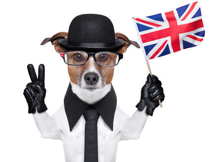 englishman: british dog with black bowler hat and black suit waving flag Stock Photo