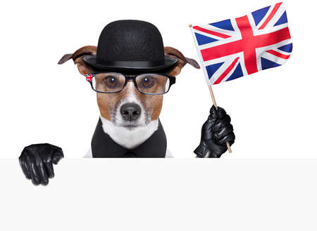 englishman: british dog with black bowler hat and black suit Stock Photo