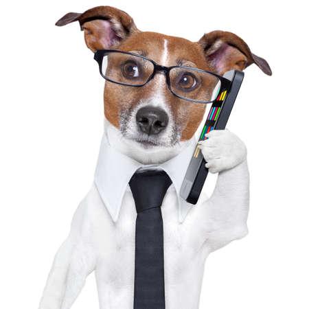perros graciosos: perro de negocios con un tel�fono inteligente y gafas Foto de archivo