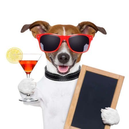 funny cocktail dog holding a martini glass photo