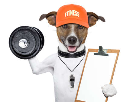 personal trainer dog with dumbbells and a clipboard Stock Photo