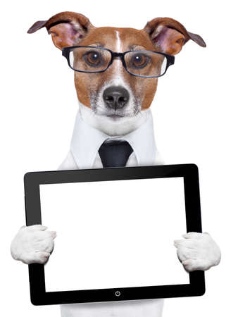 funny dogs: business dog with a tablet pc and glasses