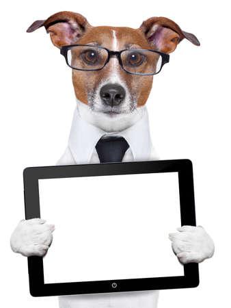 perros graciosos: perro de negocios con un Tablet PC y gafas Foto de archivo