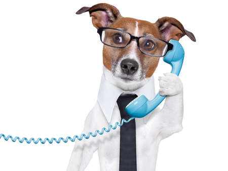 carefully: business dog with a tie and glasses listening carefully on the phone Stock Photo