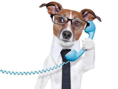 chien: chien d'affaires avec une cravate et des lunettes écoutant attentivement sur le téléphone Banque d'images