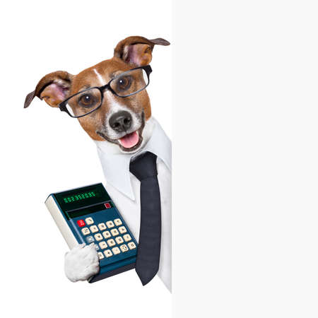 電卓: 空白のページがスーツを着ての背後にある会計士犬