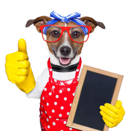working animals: housewife dog with rubber gloves  and thumb up
