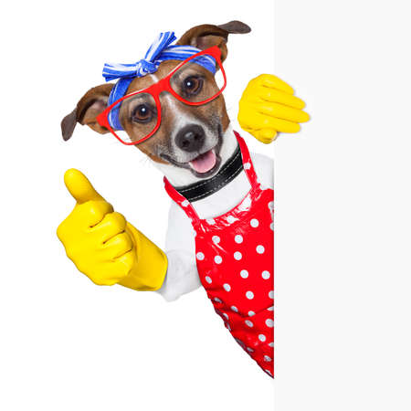 housewife dog with rubber gloves  and thumb up behind a blank space photo