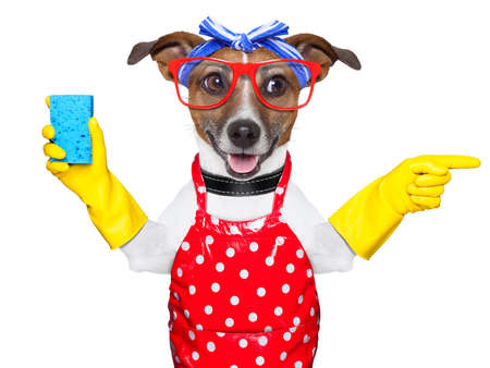 maid: perro ama de casa con guantes de goma apuntando y mirando hacia el lado Foto de archivo