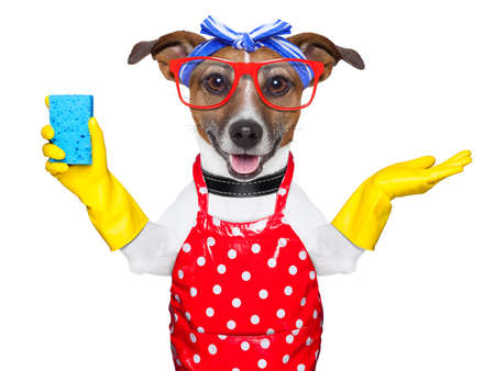 housewife dog with rubber gloves and a blue sponge