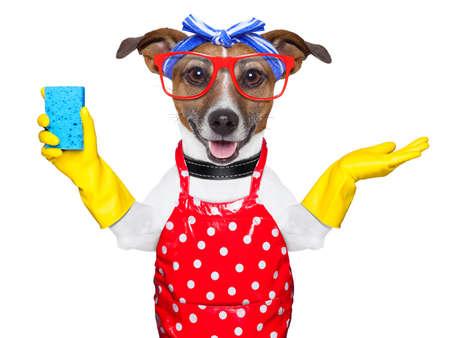 pies gospodyni z rękawic gumowych i niebieski gąbka Zdjęcie Seryjne