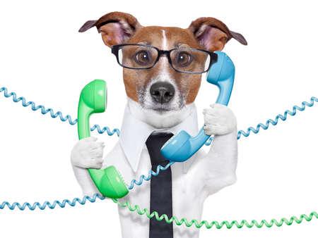 hond verstrikt in een telefoon en kabel-chaos Stockfoto