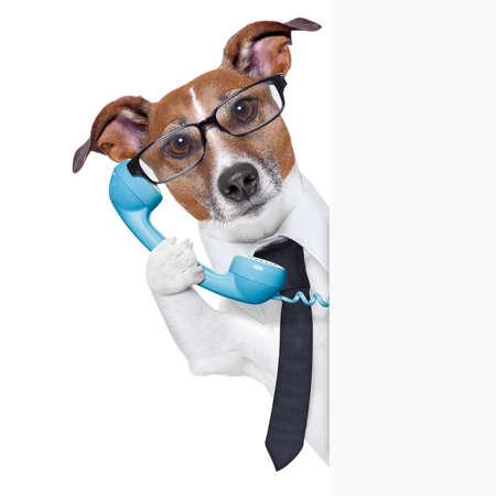 comunicar: perro de negocios en el teléfono detrás de un cartel en blanco