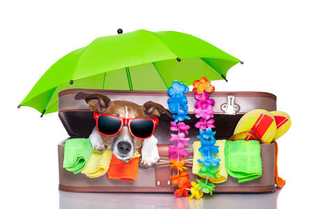 summer vacation dog in bag full of holiday items Stock Photo - 20313889