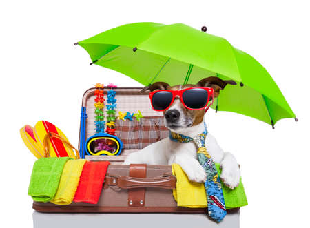 packing: summer vacation dog in bag full of holiday items